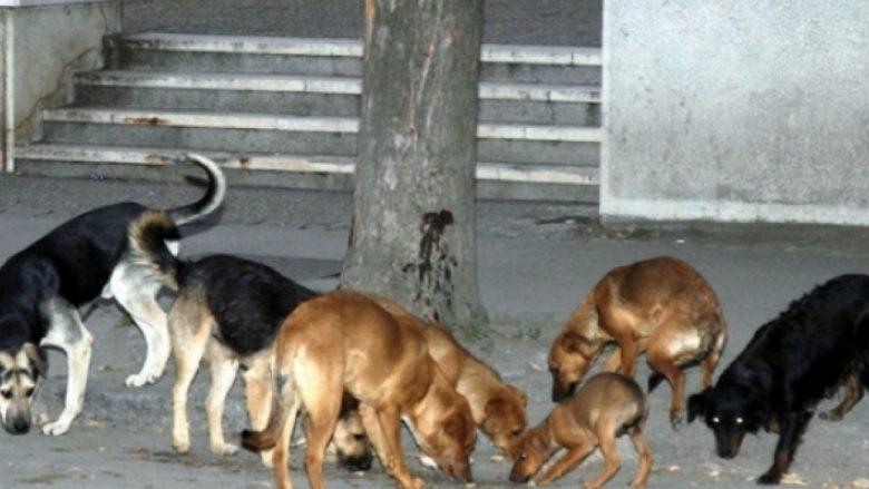 Në Shkup kapen 591 qen endacak