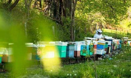 Bletarët në Maqedoni kërkojnë sqarim për origjinën e mjaltës së importuar
